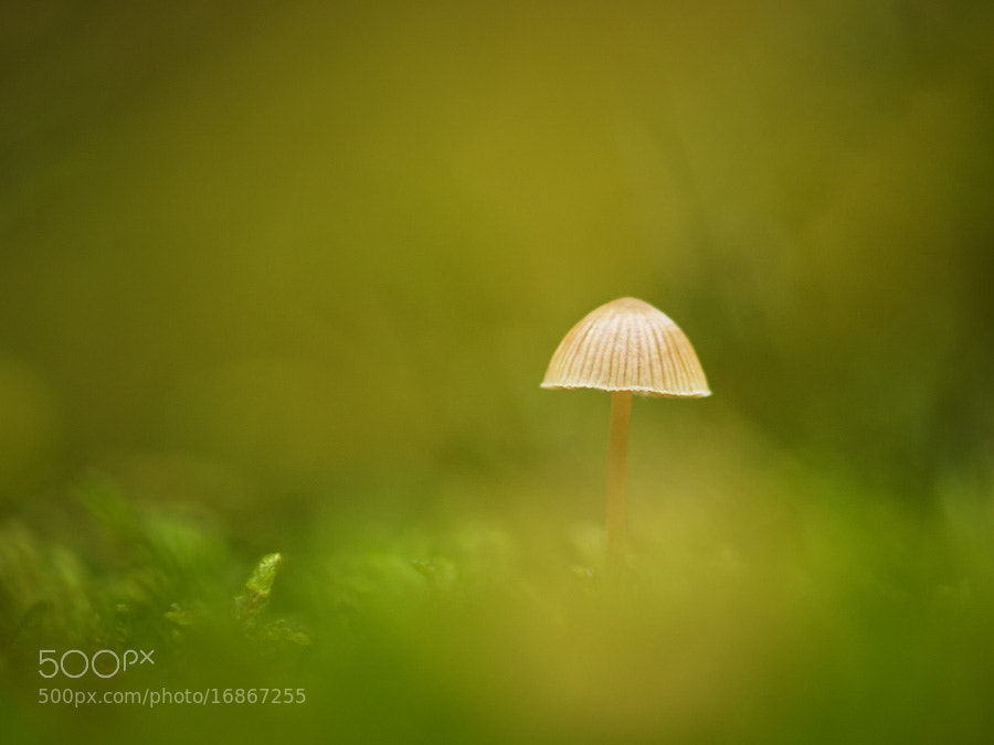 Photograph mushroom in the moss by Manfred Huszar on 500px