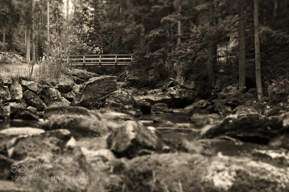 Photograph bridge in the woods by Manfred Huszar on 500px