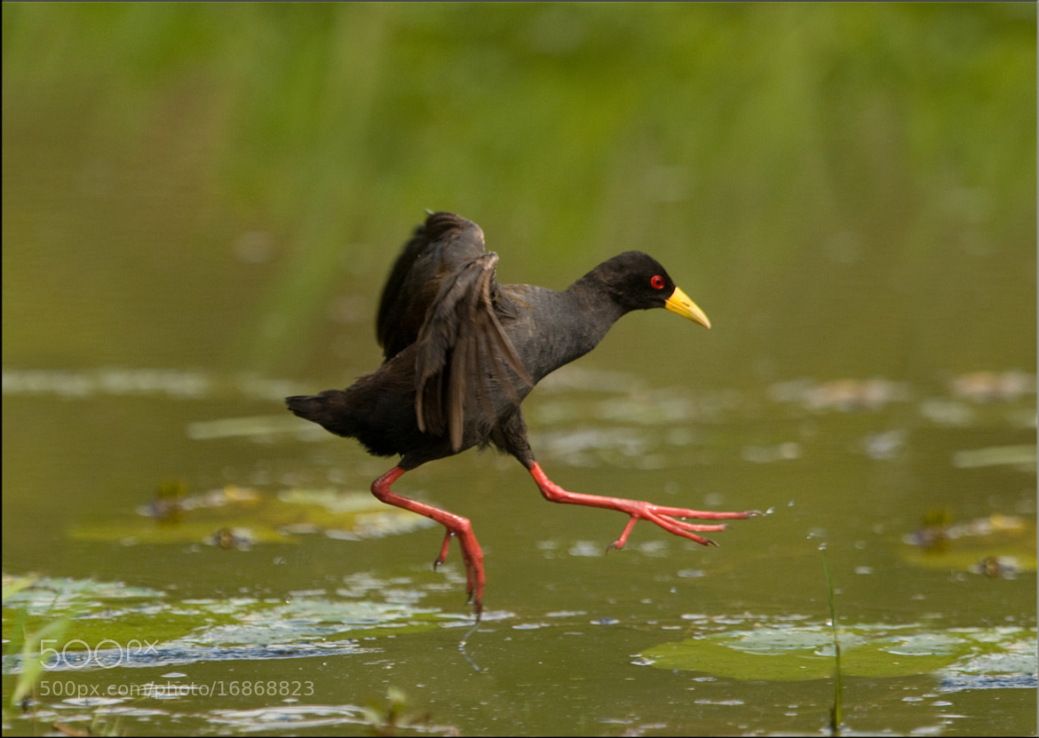 Photograph Walking on water by Ina Turner on 500px
