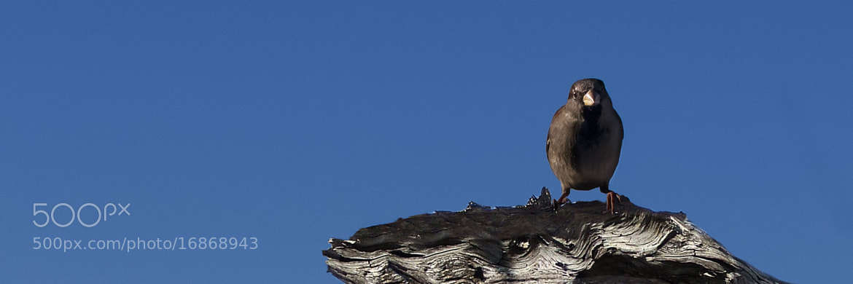 Photograph The Bird by Mikael Sundberg on 500px