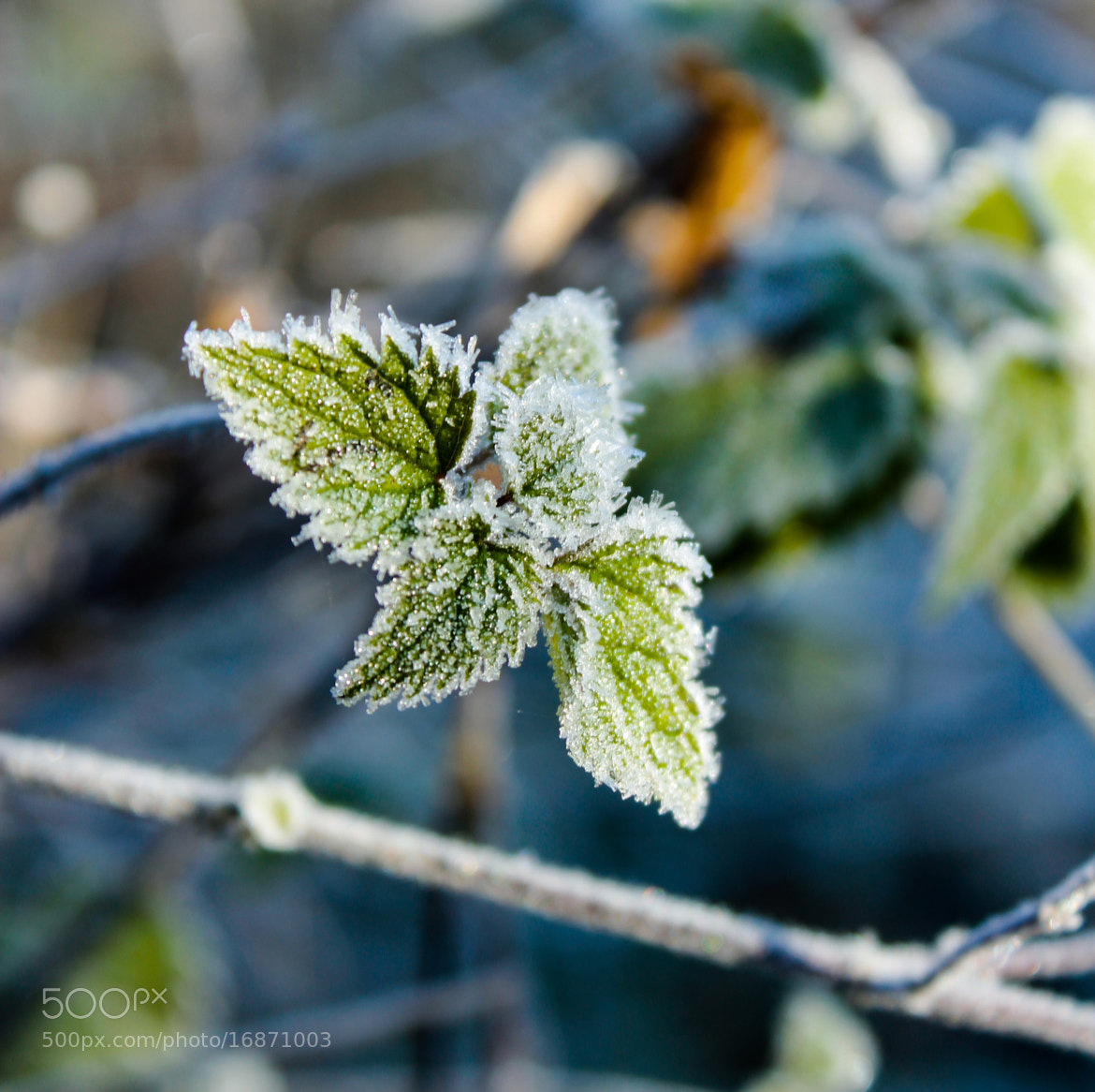 Photograph Frosty morning - fully covered by Tanasa Alin on 500px