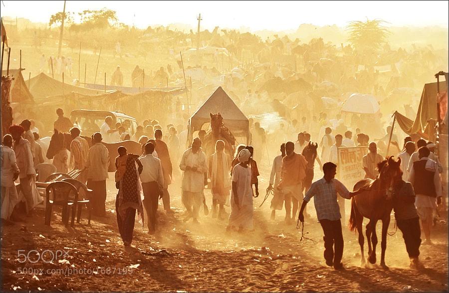 Photograph Pushkar Camel Fair - India by Woosra Kim on 500px