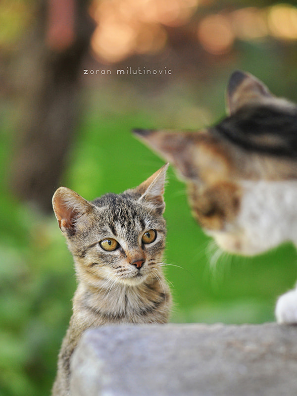Photograph You Talkin' to Me? by Zoran Milutinovic on 500px