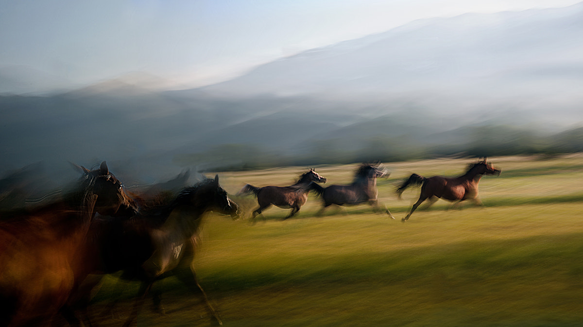 Photograph Free gallop by Milan Malovrh on 500px