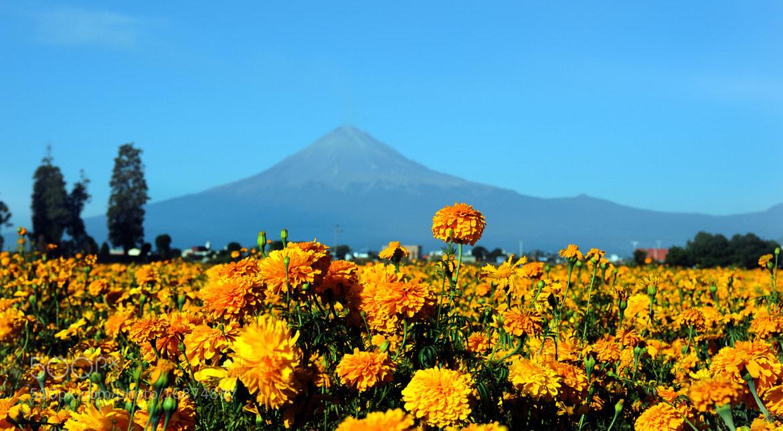 Photograph Hallowween flowers and Volcano by Cristobal Garciaferro Rubio on 500px