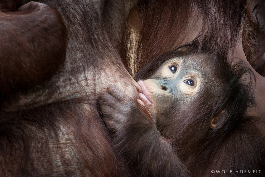 Photograph THE BABY by Wolf Ademeit on 500px