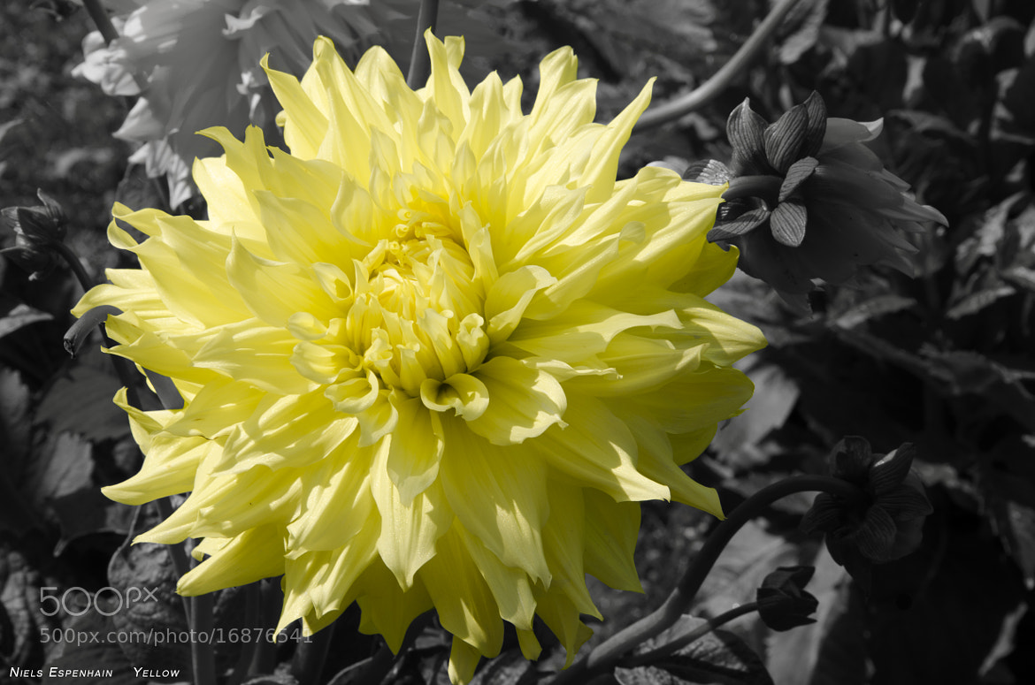 Photograph Yellow by Niels Espenhain on 500px