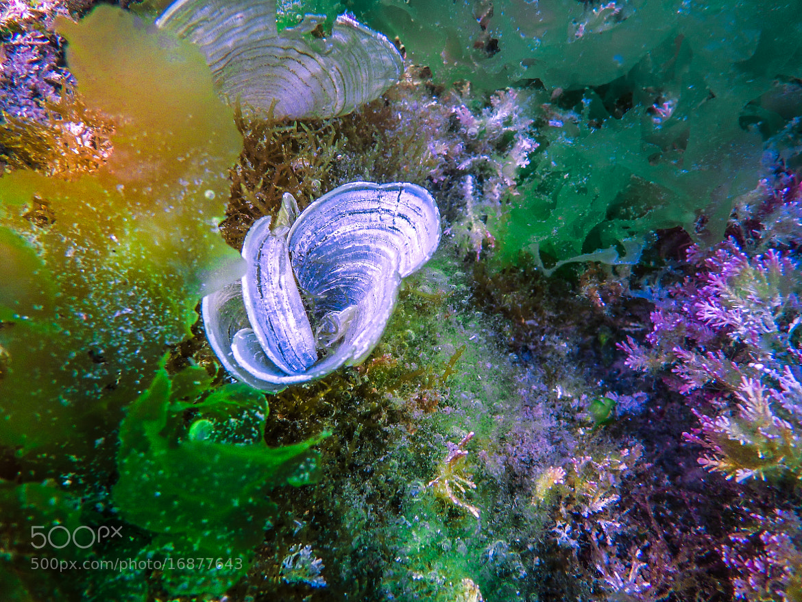 Photograph Garden under the sea by love leica on 500px