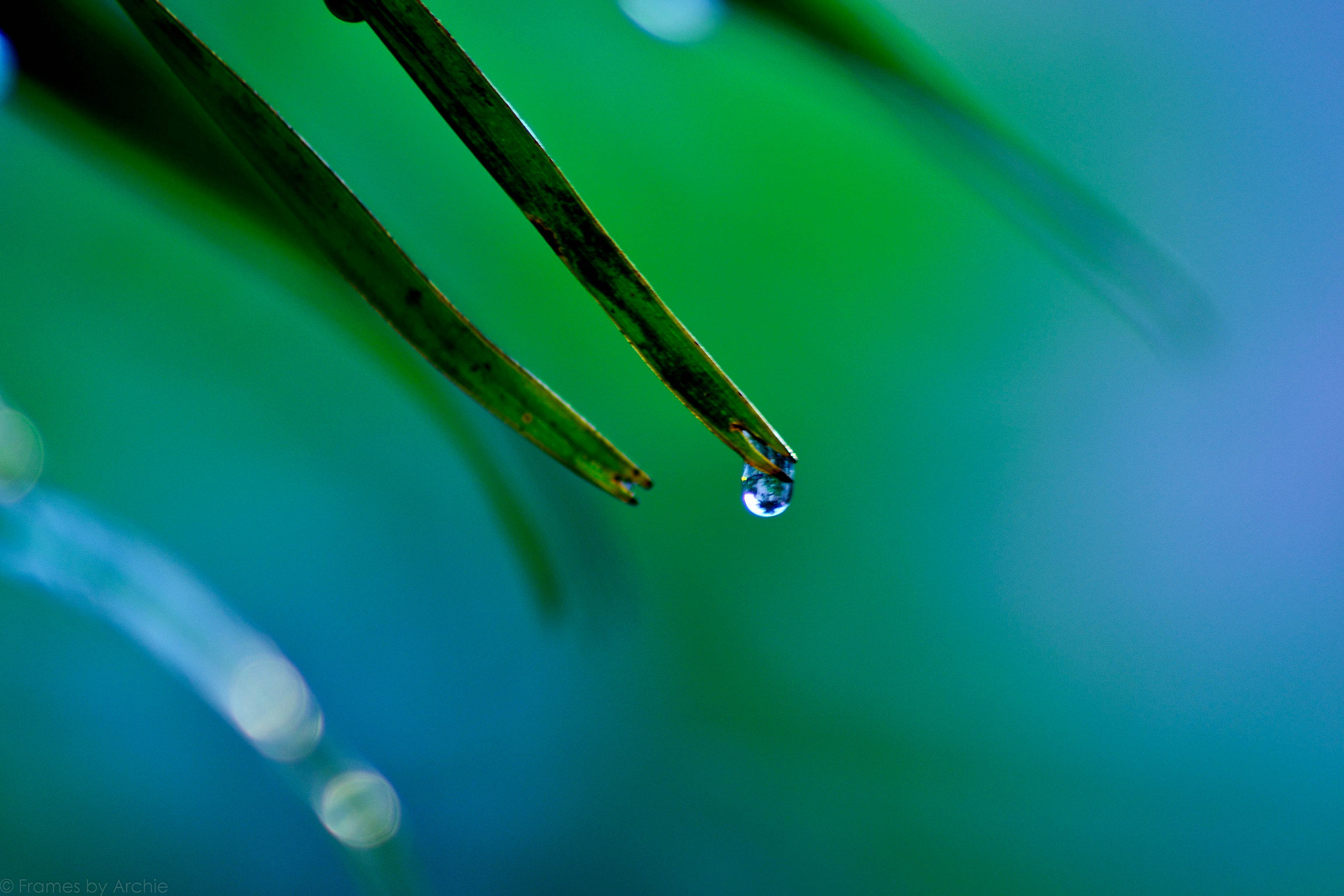 Photograph Droplet by Archie Lavate on 500px