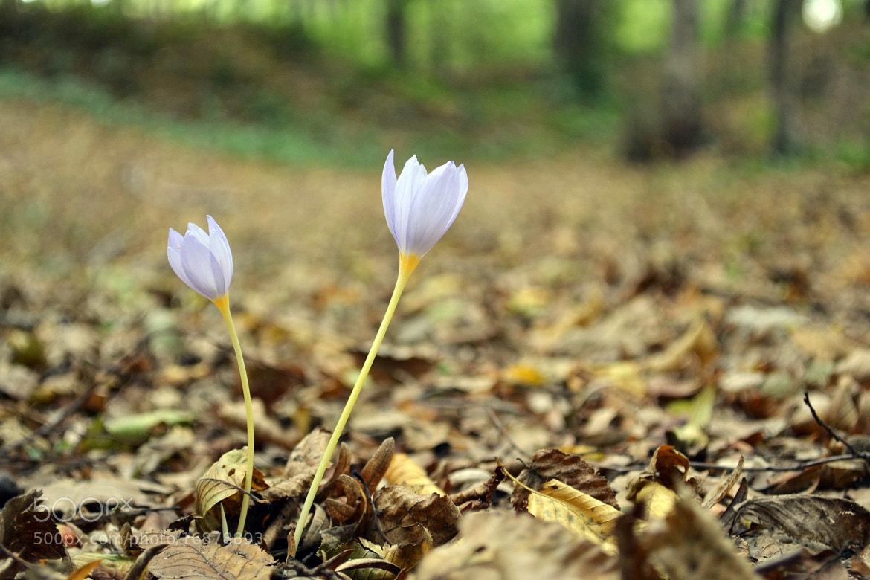 Photograph Flowers.. by Yunus Emre Sahinoglu on 500px