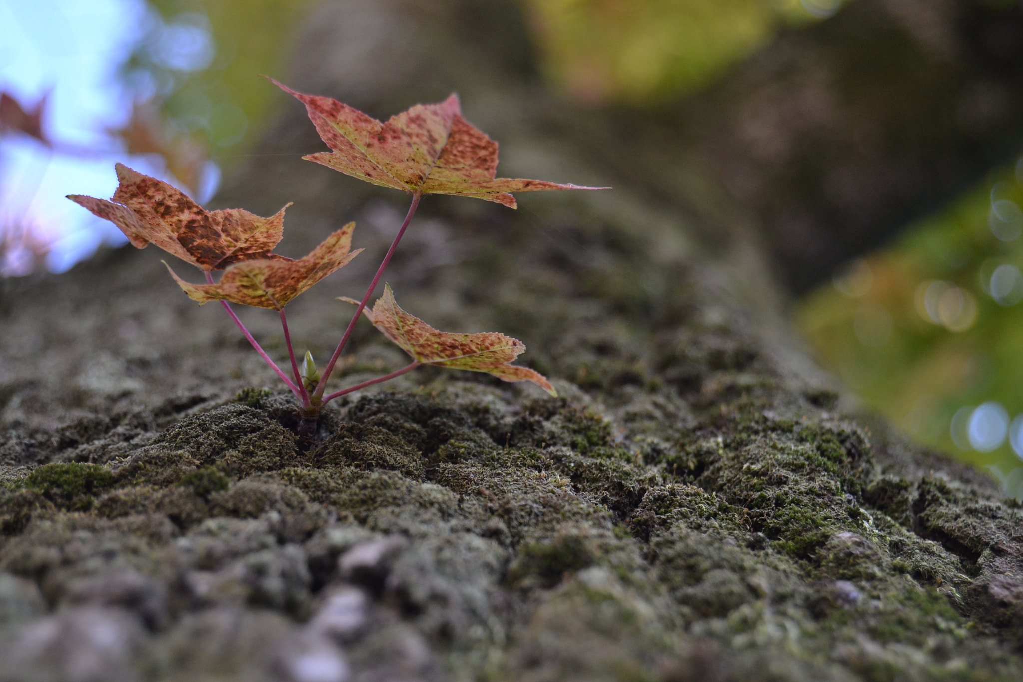 Photograph sprouting... by Hiroto Inoue on 500px