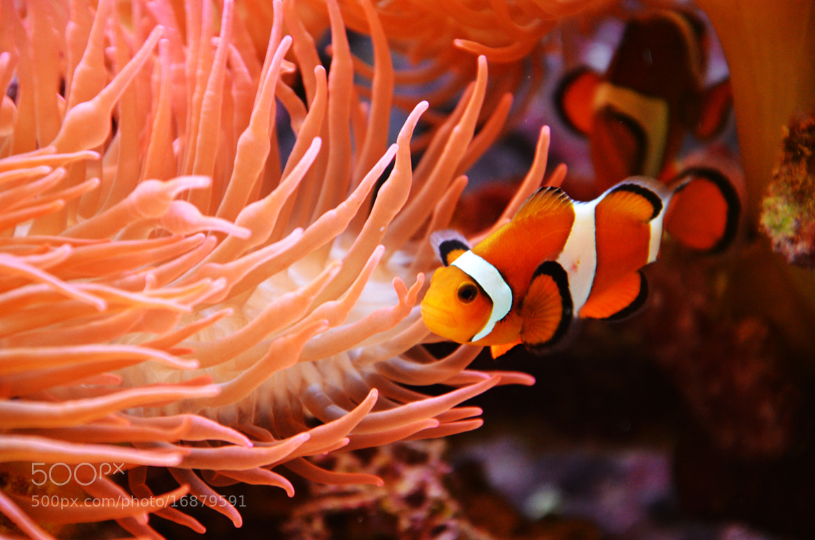Photograph finding nemo  by Julia Kaufmann on 500px