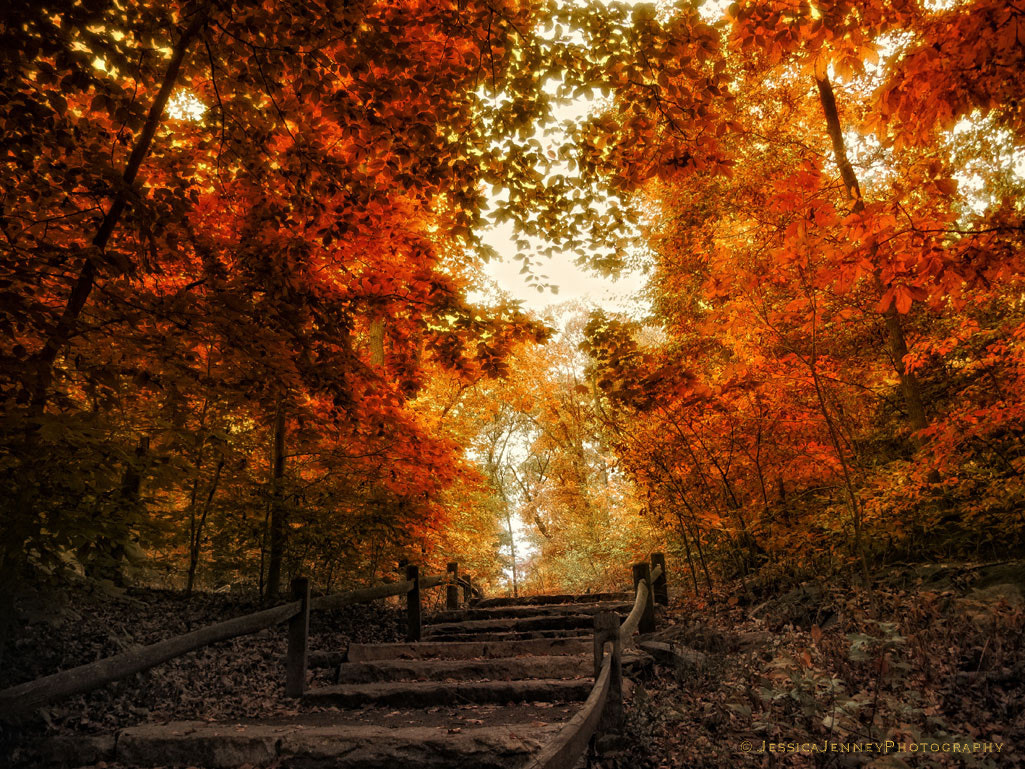 Photograph The Approach by Jessica Jenney on 500px