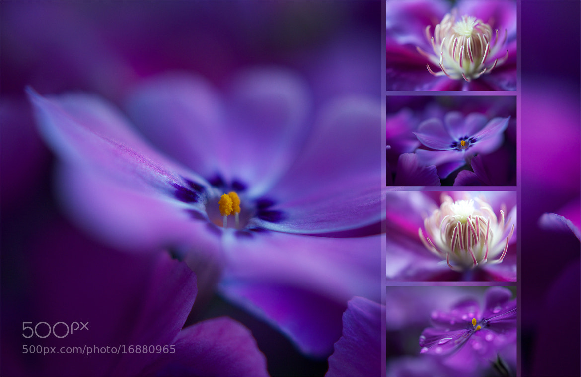 Photograph floral colors ...   ... violet & pink by pho-t-ographic-s * on 500px