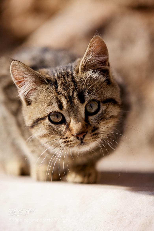 Photograph A Small Cat by Derek Yuen on 500px