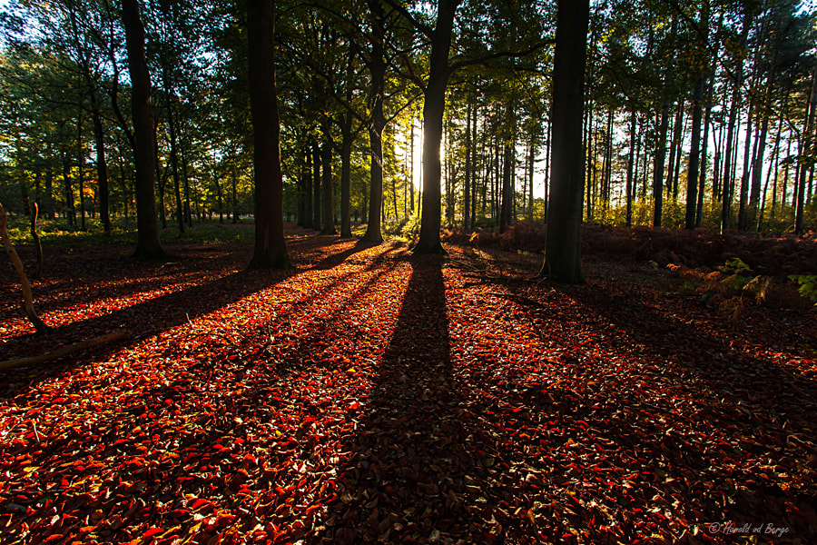 Photograph Shadows and light by Harold van den Berge on 500px