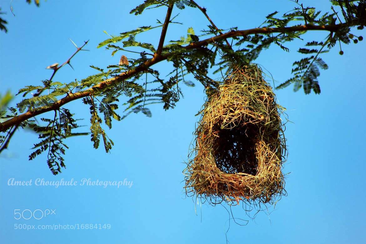 Photograph Nest by Ameet Choughule on 500px