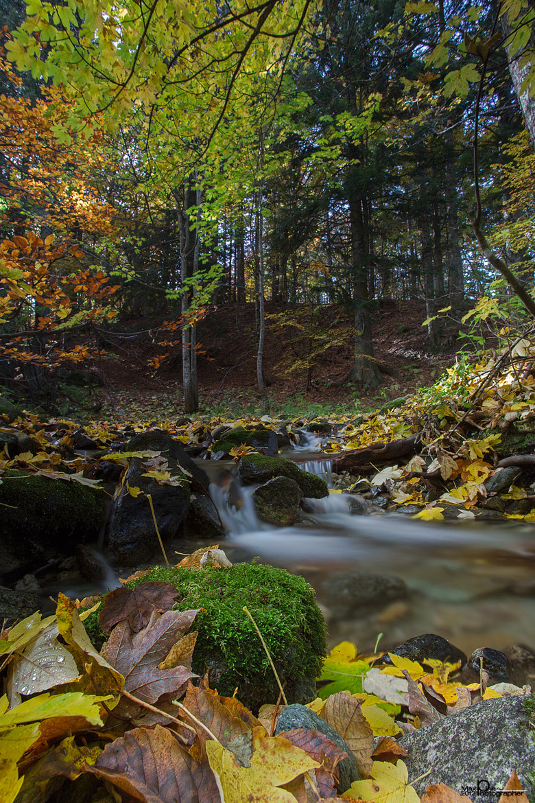 Photograph autumn contrasts by Massimo Dadone on 500px