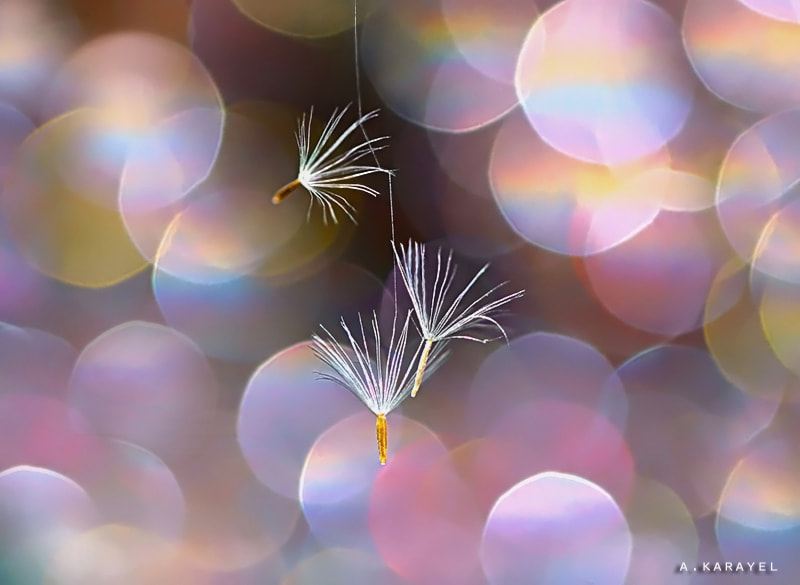 Photograph cling to life.. by karayelim on 500px