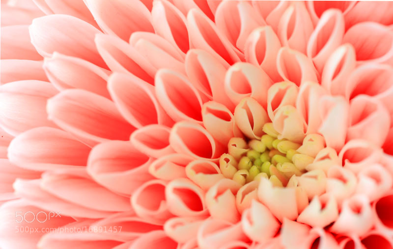 Photograph Up close with a Flower by Brian Curran on 500px