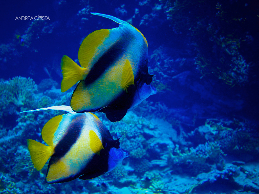 Photograph Marsa Alam diving by Andrea Costa on 500px