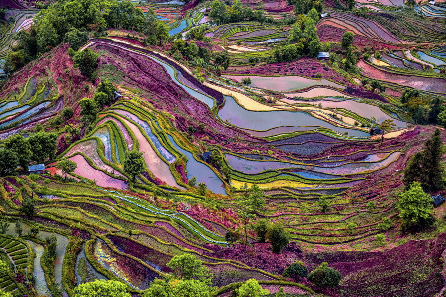 yuangyang rice terrace by enrico barletta on 500px.com