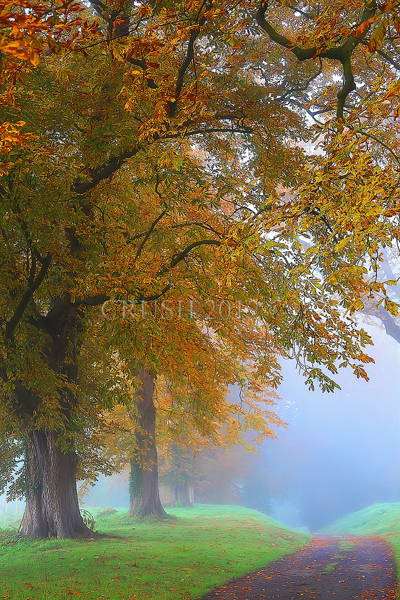 Photograph Autumn is just round the corner! by Martin Crush on 500px