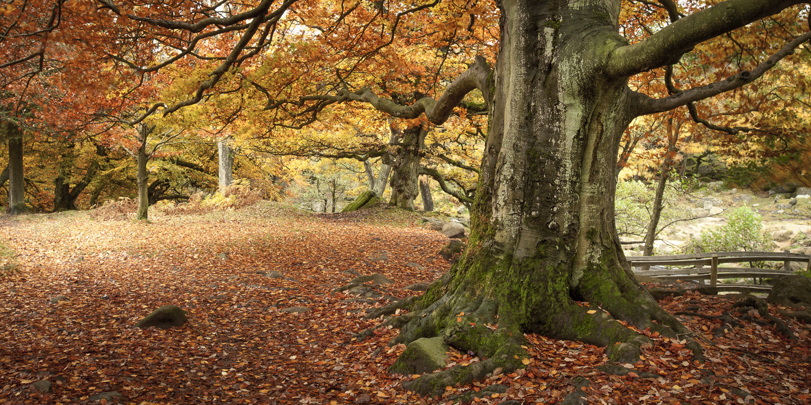 Photograph Padley Autumn ii by Terry Gibbins on 500px