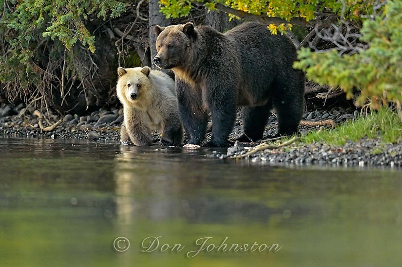 Photograph Chilcotin BC Wilderness Mountain Grizzlies by Don Johnston on 500px