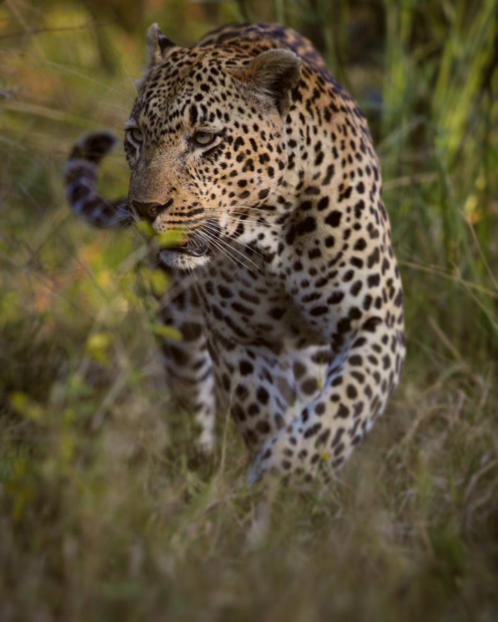Slow by Chris Fischer on 500px