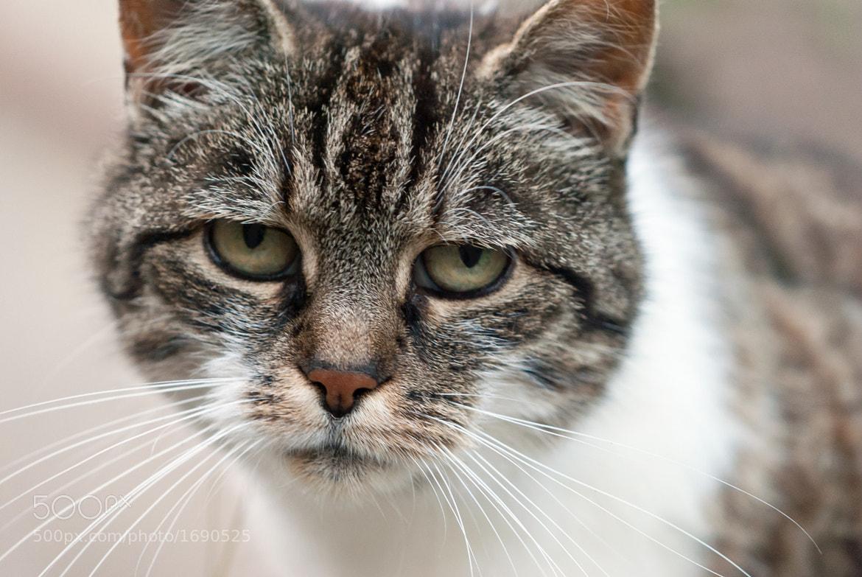 Photograph sad kitty is sad. by Stephan Knoll on 500px
