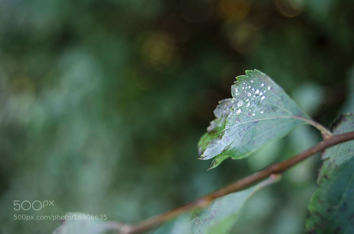 Photograph leaf by Cajsa Carlsson on 500px