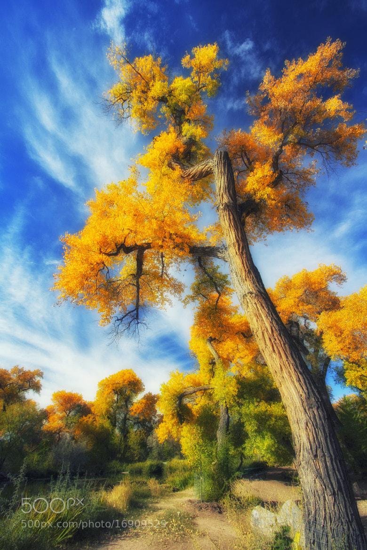 Photograph Orange Skies by Brenton Biggs on 500px