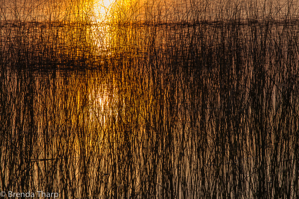 Photograph Pond Textures, Minnesota by Brenda Tharp on 500px