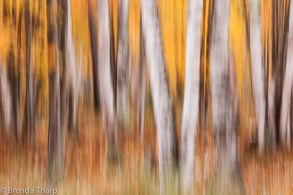 Photograph Forest Impression #2 by Brenda Tharp on 500px
