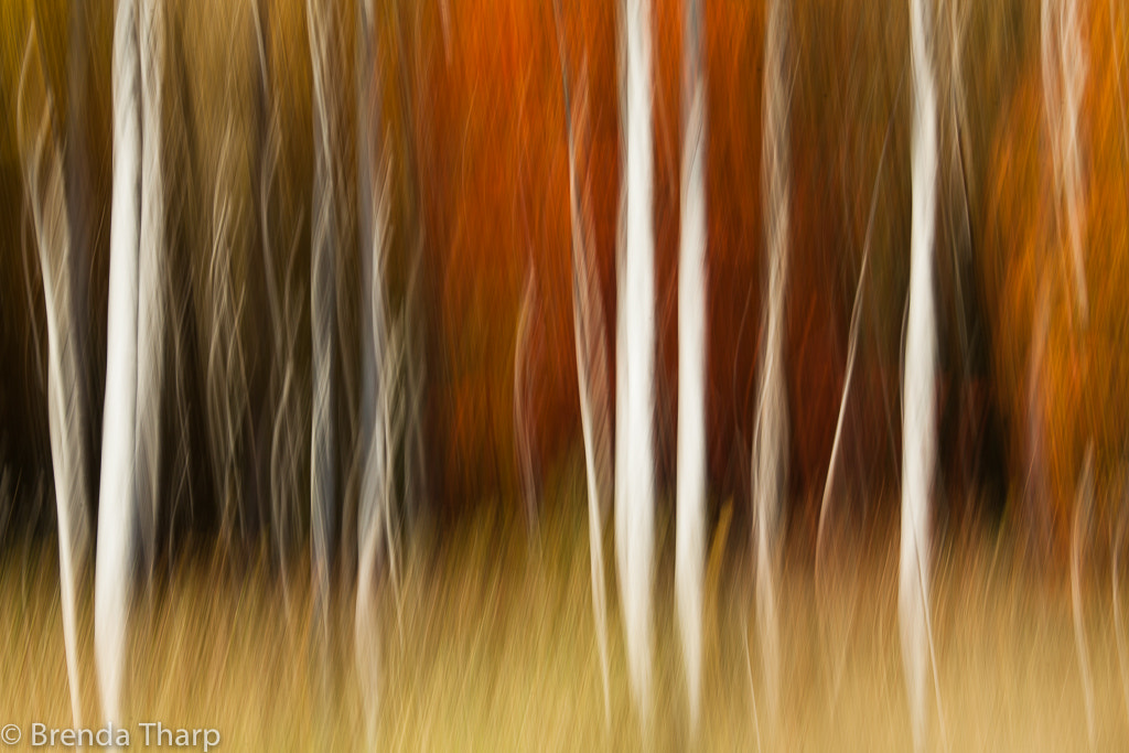 Photograph Forest Impression #1 by Brenda Tharp on 500px