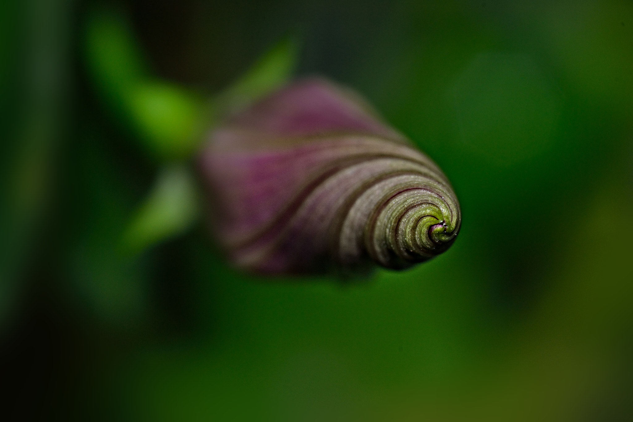 Photograph Spiral.... by Pilar Bau on 500px