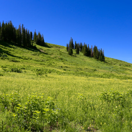 Meadow, Canon EOS 5D MARK III, Canon EF 17-40mm f/4L USM
