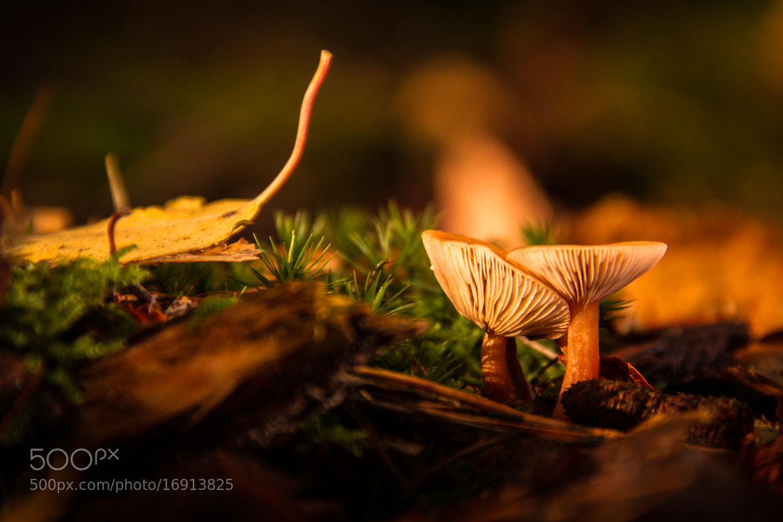 Photograph Mushroom Love by Chris Jungermann on 500px