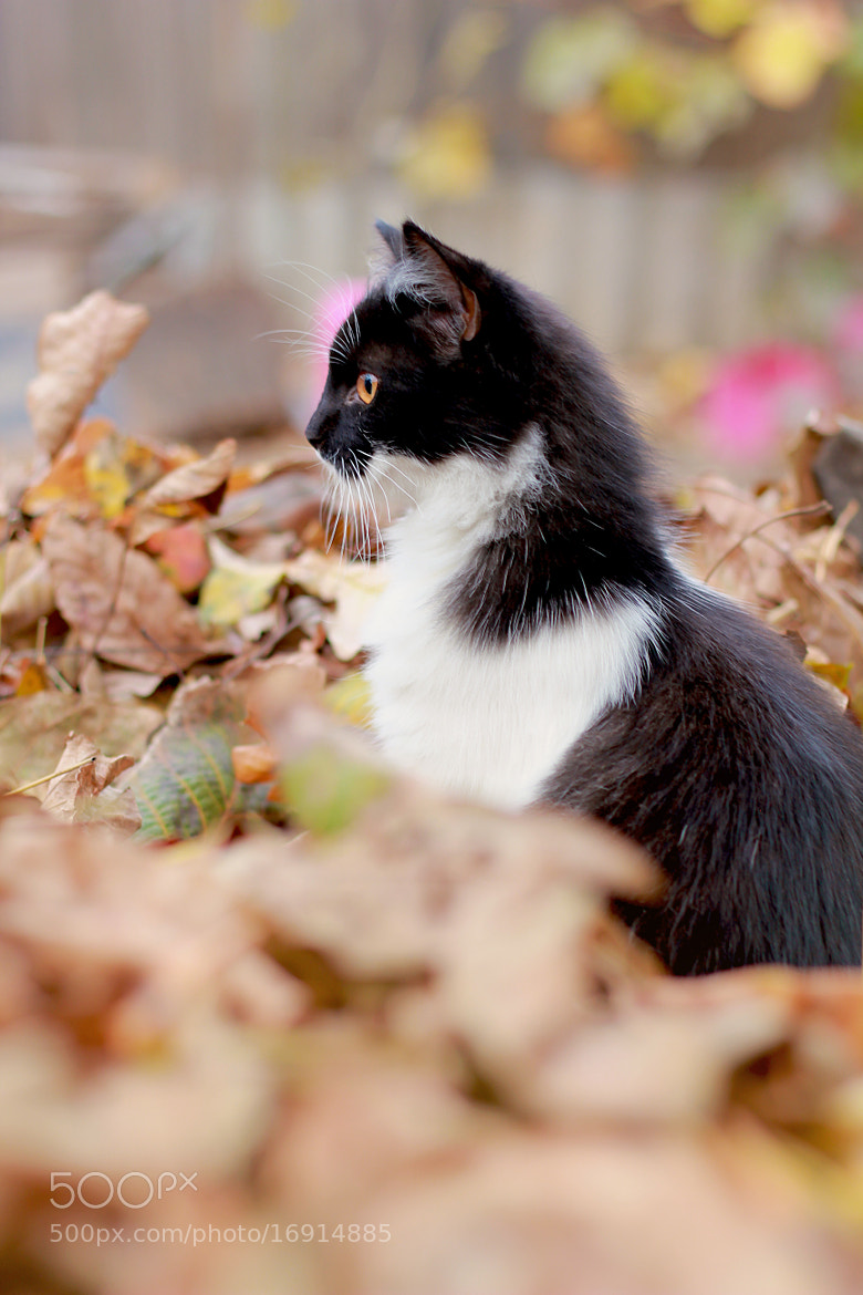 Photograph puss in the leaves by Kate Seryogina on 500px