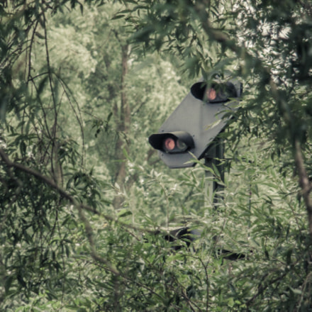 Forest Signal, Canon EOS 50D