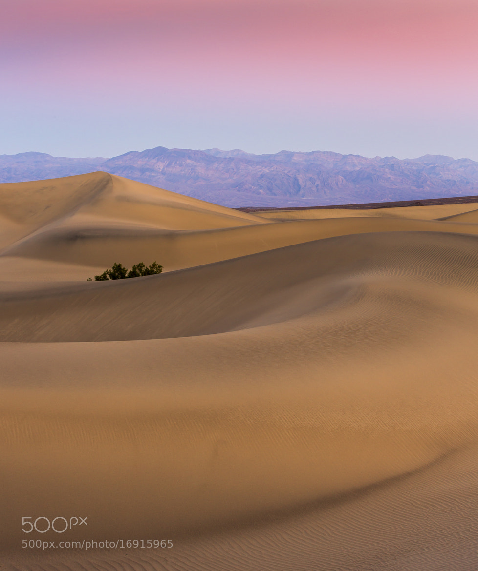 Photograph Death Valley's Mesquite Dunes Sunset by Leigh Anderson on 500px