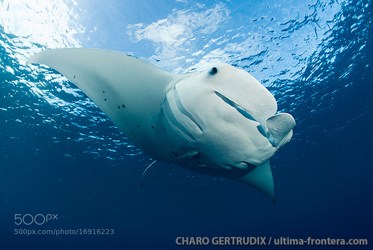 Photograph Manta by Charo Gertrudix on 500px