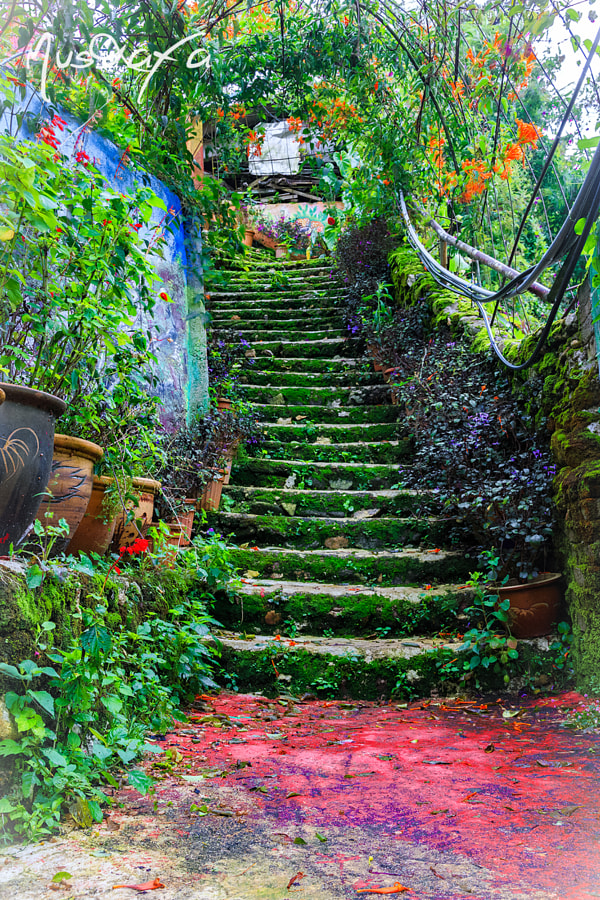 The Way to Rose Garden