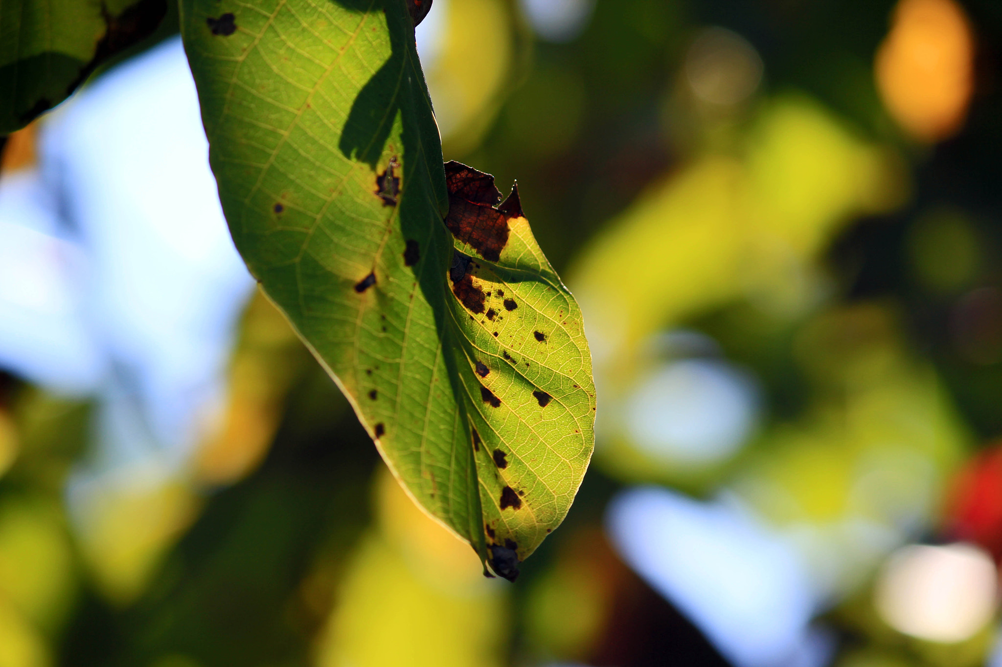 Photograph Leaves by Jessica Ramos on 500px