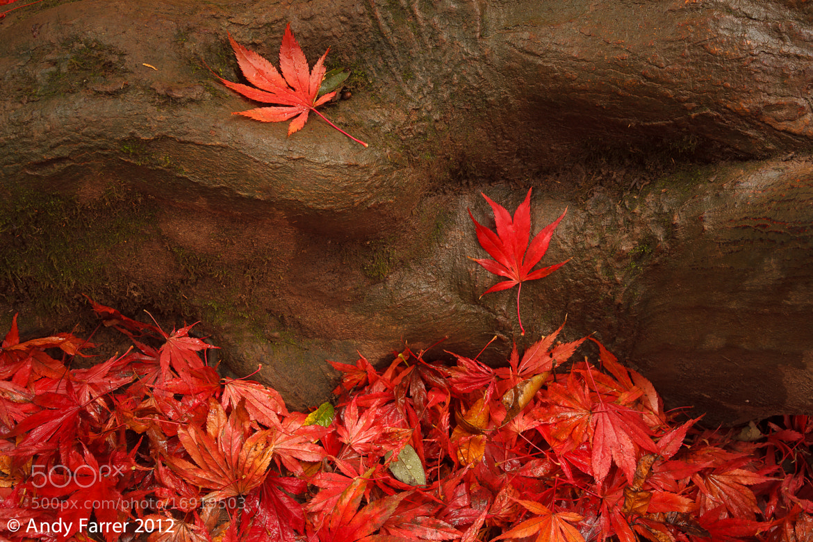 Photograph Autumn Macro by Andy Farrer on 500px