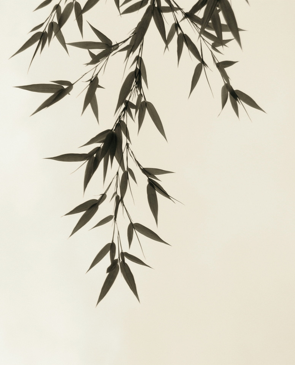 Photograph Bamboo by John Wesley on 500px