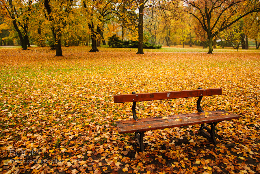 Photograph Park bench by Bartek Papierski on 500px