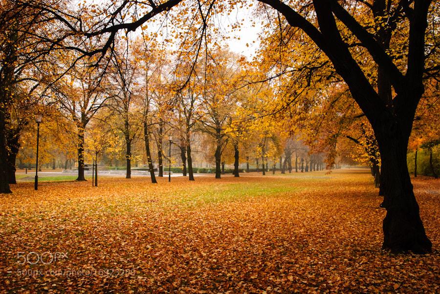 Photograph Autumn in Lodz by Bartek Papierski on 500px