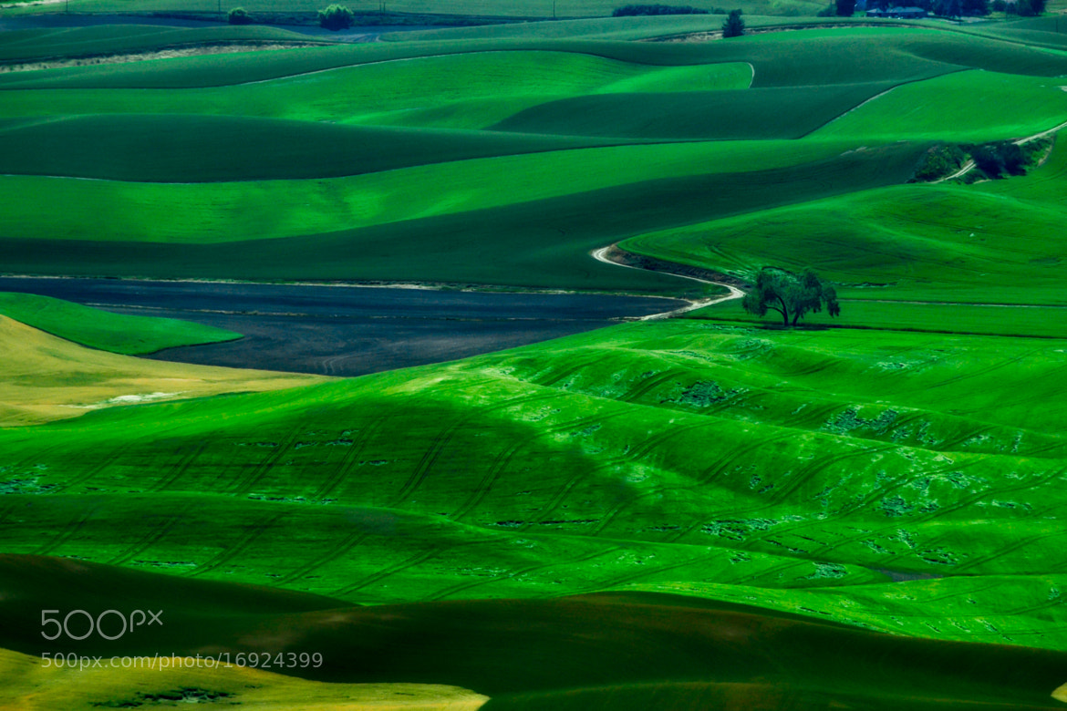 Photograph Rolling Hills of Palouse by Judith Jean-Baptiste on 500px